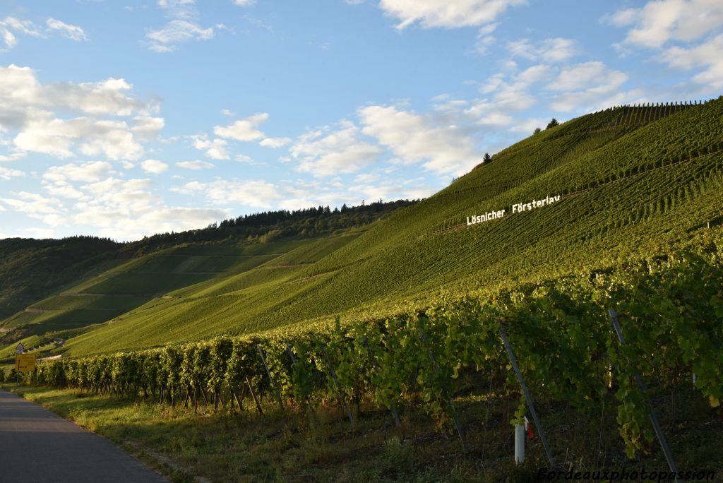 Côtes de Mosela, las colinas donde crece el vino en el Sarre.