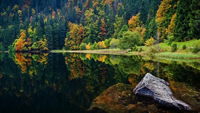 Naturaleza de la Selva Negra